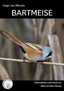 Bartmeise T